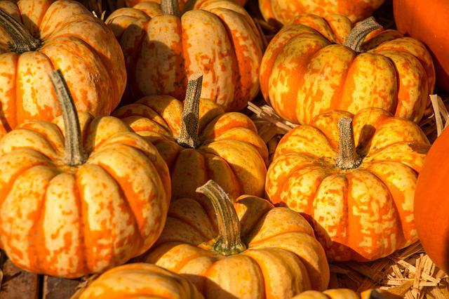 Pumpkin, Autumn, Halloween, Orange, Harvest Festival