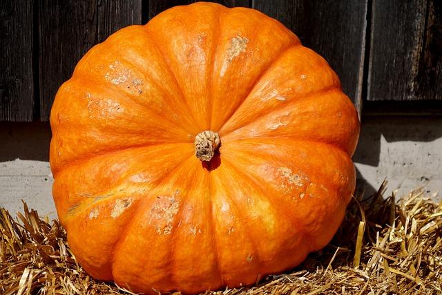 Pumpkin, Orange, Harvest, Food, Autumn, Nature