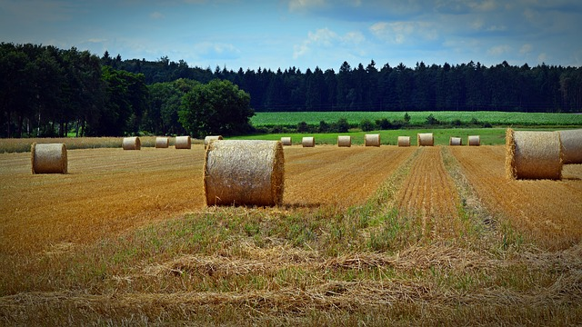 Straw Bales, Harvest, Straw, Agriculture, Round Bales