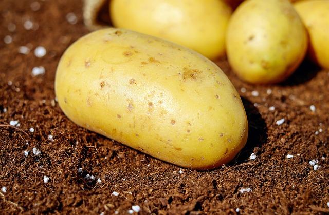 Potatoes, Vegetables, Erdfrucht, Bio, Harvest, Garden