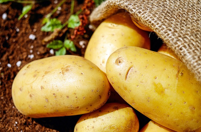 Potatoes, Vegetables, Erdfrucht, Bio, Harvest