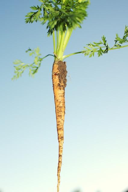 Harvesting, Harvested, Arable, Arable Land, Bauer