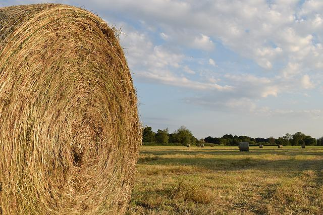 Hay, Hay Bales, Agriculture, Harvested, Round Bales