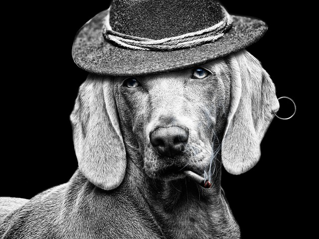 Cigarette, Hat, Dog, White Black