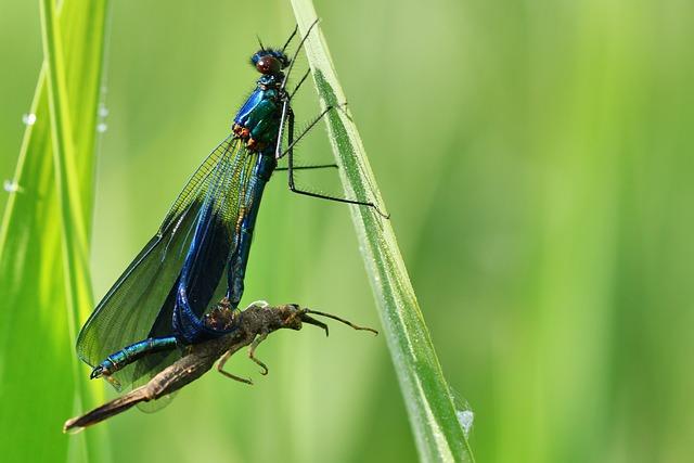 Dragonfly, Skinning, Metamorphosis, Hatch