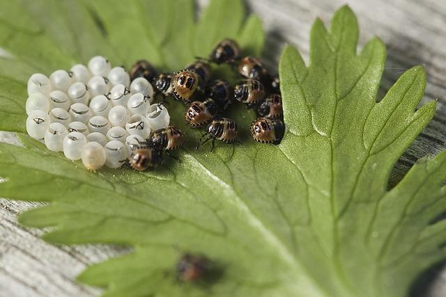 Bug, Leaf Bug, Insect, Nature, Forest, Egg, Hatch