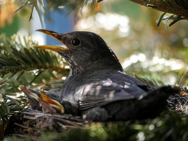 Animals, Bird, Nature, Blackbird, Nest, Breed, Hatching