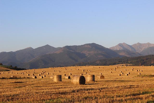Field, Hay, Straw, Slovakia, Ssas Straw, Agriculture