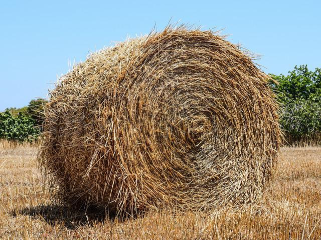 Hay Bale, Hay, Forage, Dry Grass, Agriculture, Rural