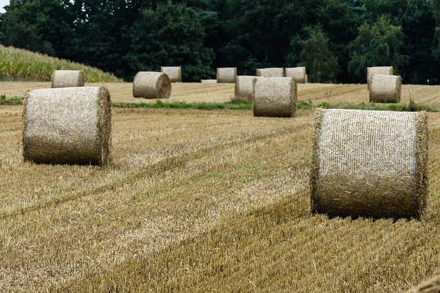 Hay, Harvest, Hay Bales, Field, Straw Bales