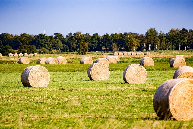 Hay, Bale, Agriculture, Hay Bales, Round Bales