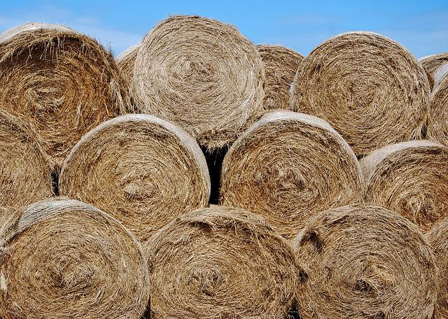 Hay, Bales, Round, Blue Sky, Summer, Agriculture, Farm