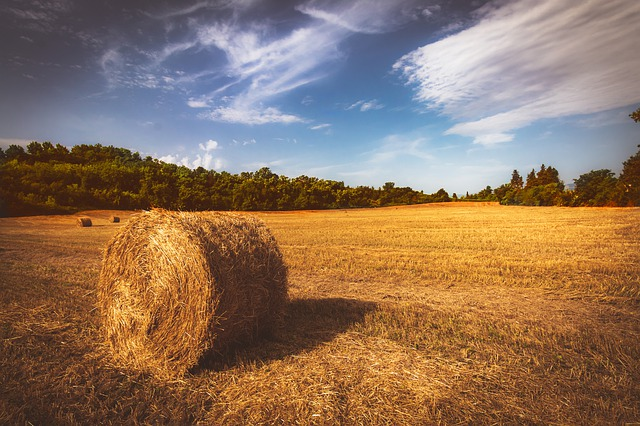 Straw, Hay, Field, Agriculture, Summer, Nature, Rural