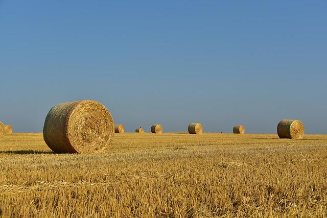 Hay, Straw Bales, Hay Bales, Straw, Harvest, Rural
