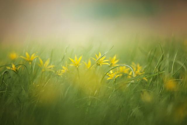 Grass, Nature, Haymaking, Field, Summer, Yellow Flowers