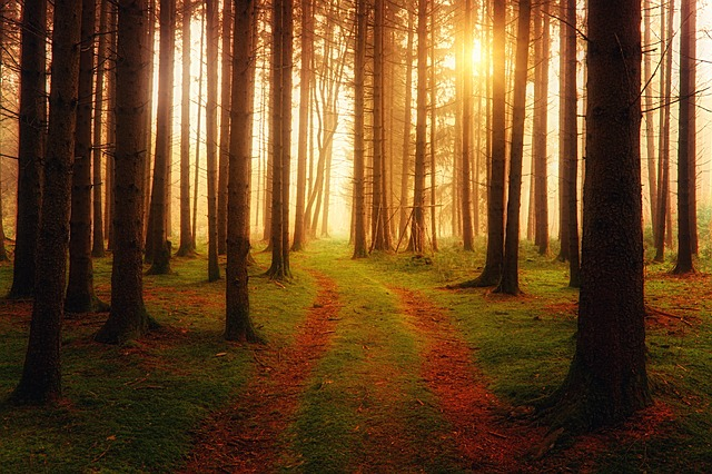 Away, Light, Forest, Haze, Sun, Rays, Fog, Foggy