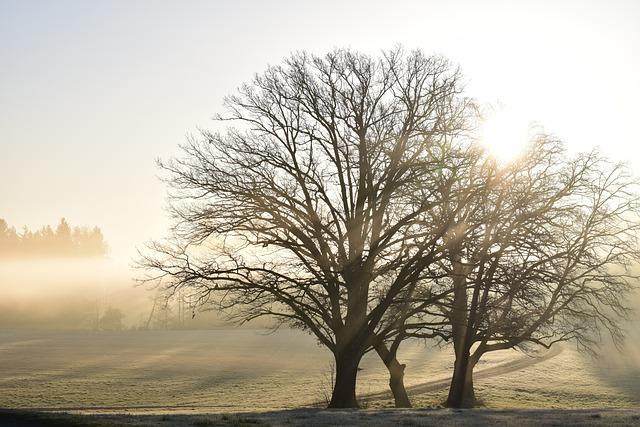 Tree, Nature, Landscape, Dawn, Haze, Sunrise, Glade
