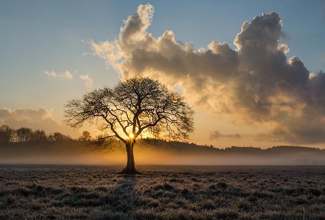 Lone Tree, Tree, Oak, Clouds, Landscape, Haze, Mist