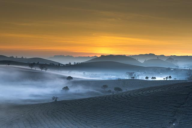 Tea Plantation, Landscape, Vietnam, Haze, Morning