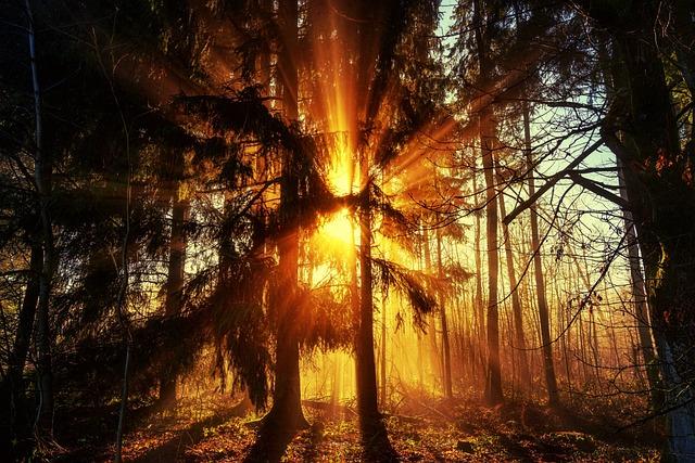 Tree, Nature, Wood, Light, Sun, Fog, Haze, Light Beam