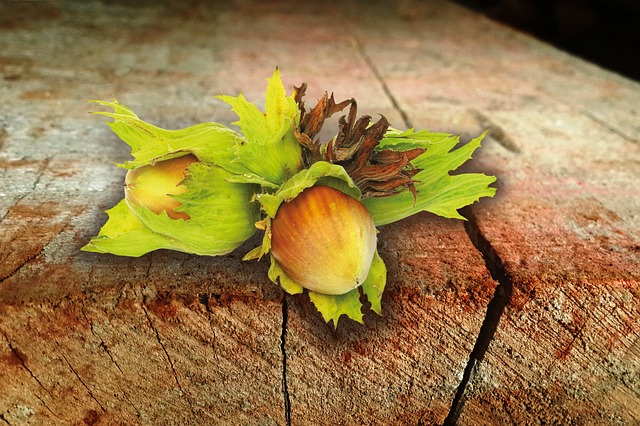 Hazelnut, Nut, Late Summer, Autumn, Food, Brown, Shell