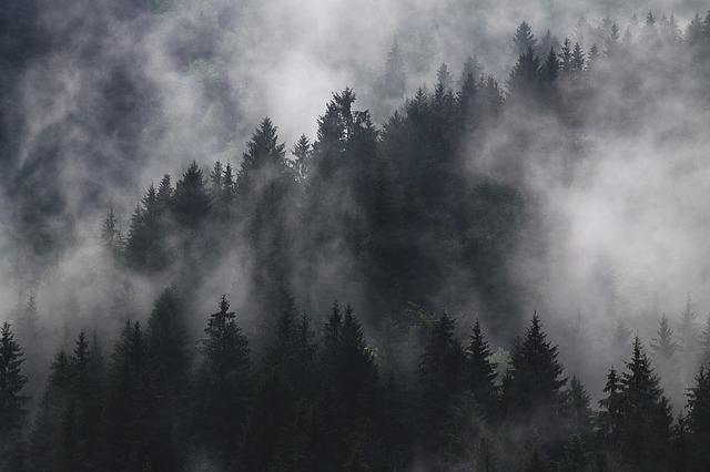 Fir Trees, Fog, Foggy, Forest, Hazy, Mist, Murky