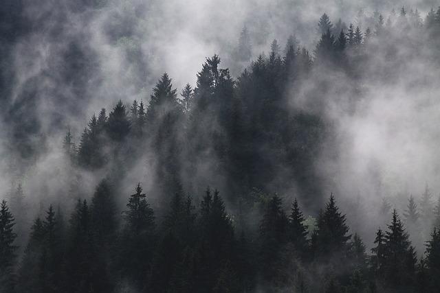Fir Trees, Fog, Foggy, Forest, Hazy, Mist, Murky