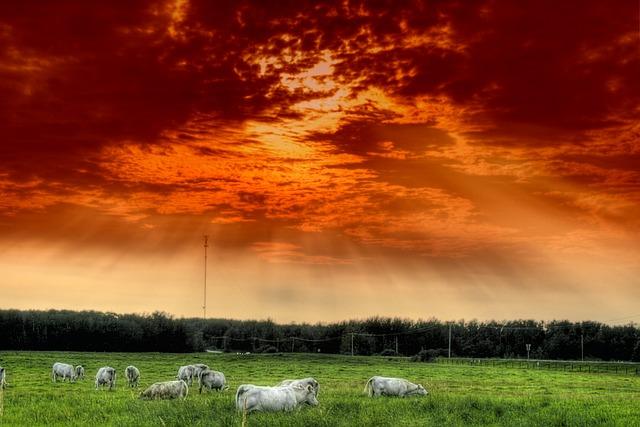Alberta, Canada, Cattle, Herd, Hdr, Sky, Clouds, Forest