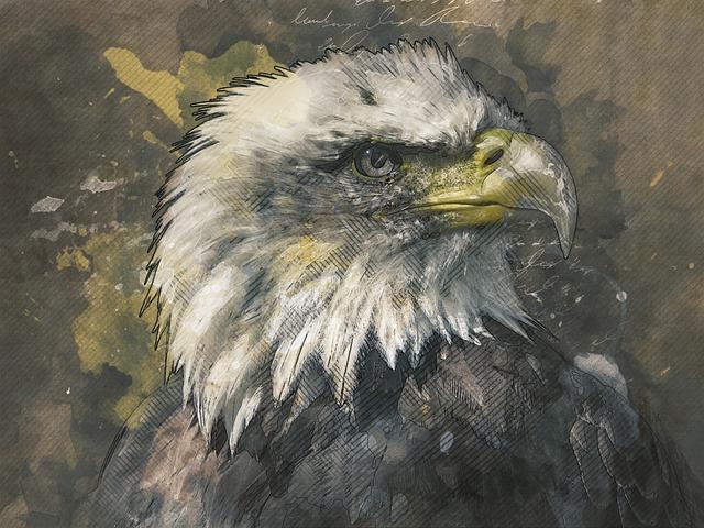 Bald Eagle, Eagle, Raptor, Beak, Feathers, Animal, Head