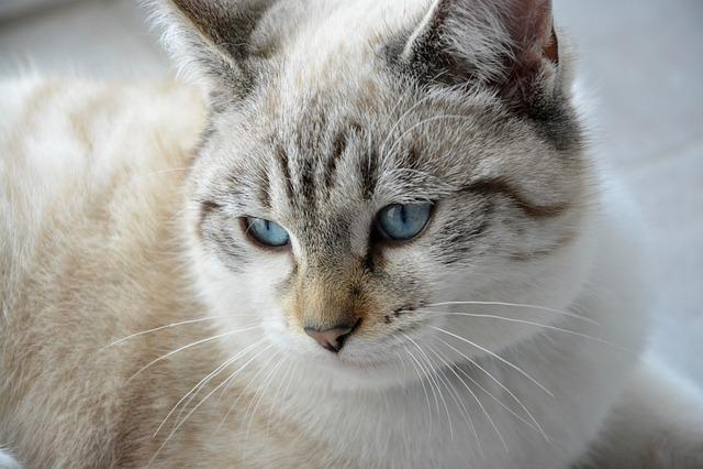 Cat, Young Cat, Head, Moustache, Blue Eyes