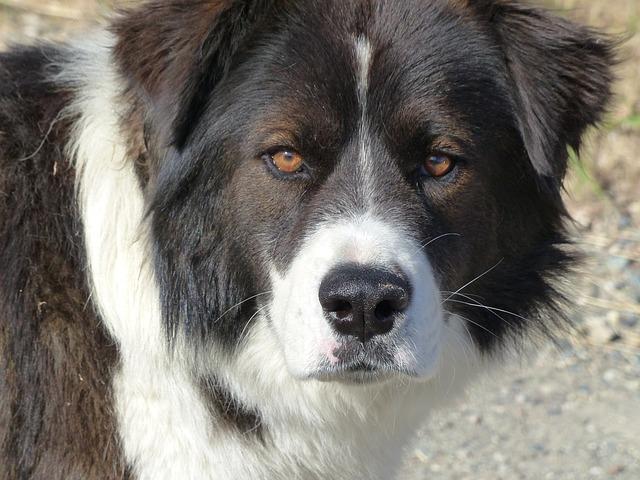 Dog, Pet, Head, Portrait, Animal, White, Black, Cute