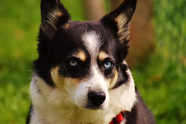 Dog, View, Good, Animal, Pet, Eyes, Head, Loyalty