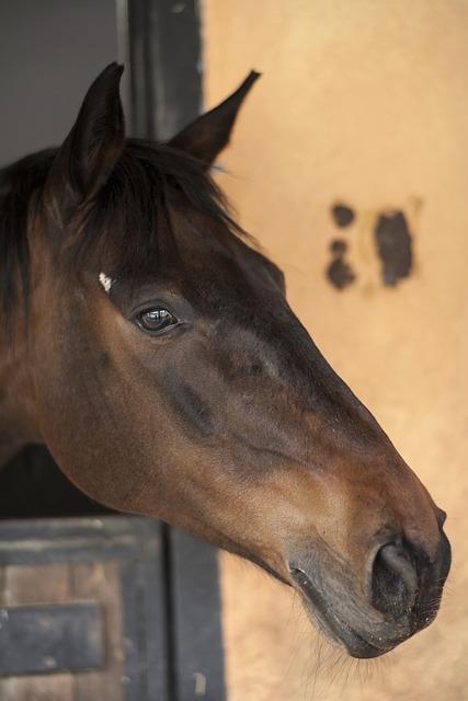 Horse, Animals, Portrait, Mammals, Head, Eyes