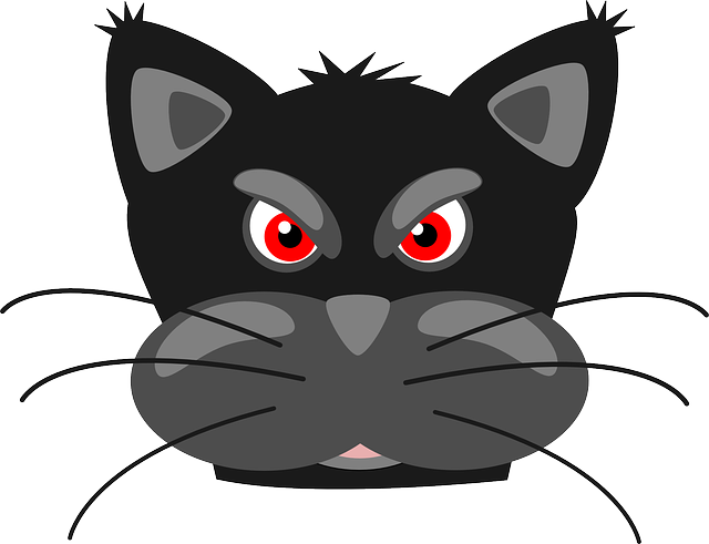 Cat, Angry, Face, Animal, Mammal, Head, Whiskers
