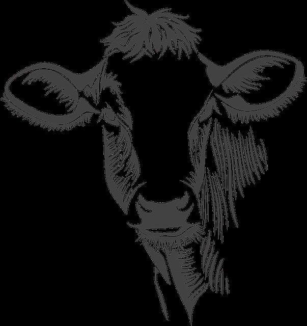 Head, Cow, Cattle, Animal, Farm