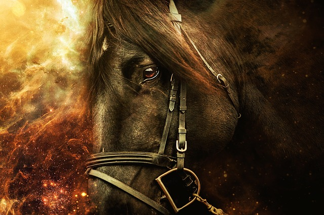 Horse, Horseback Riding, Animals, Horses, Head, Animal