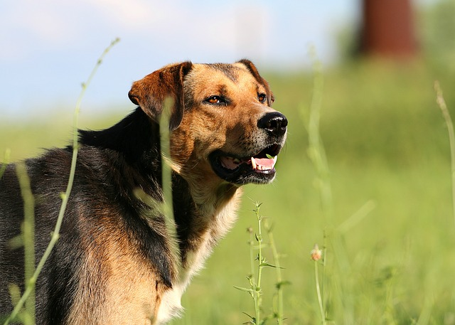 Dog, Snout, Head, Stroll, Hunting, Nature, Each