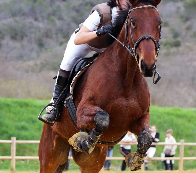 Horse, Jumper, Equine, Action, Look, Head