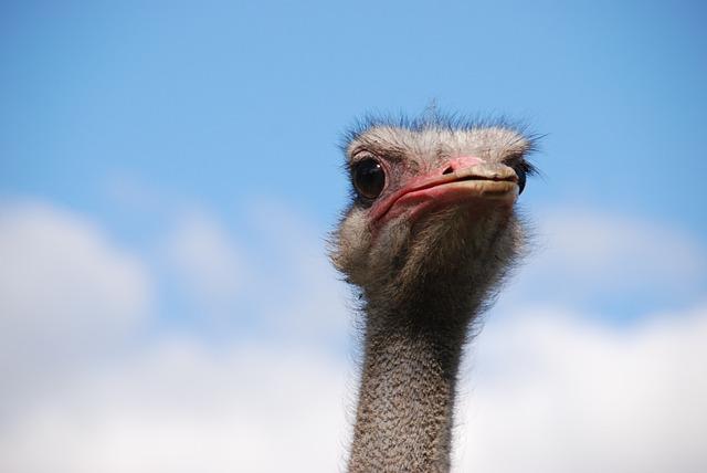 Bird, Ostrich, Neck, Beak, Eye, Air, Cloud, Blue, Head