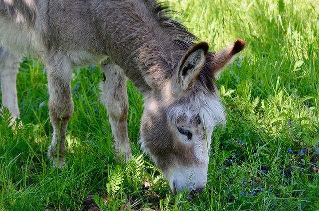 Donkey, Animal, Portrait, Farm, Head, Rural, Pasture