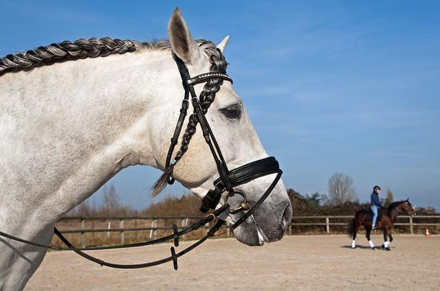 Horse, Head, Plait, Profile, Horseback Riding
