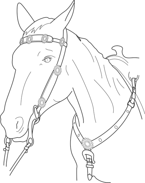 Horse, Head, Animal, Stallion