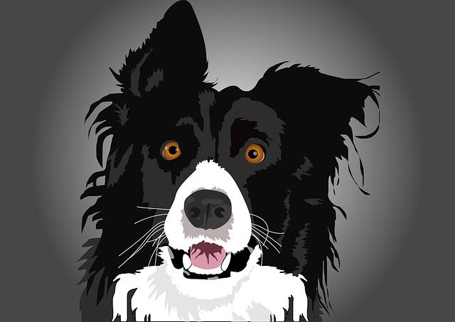 Dogs, Head, Race, Pet, Animal, Heads, Portrait