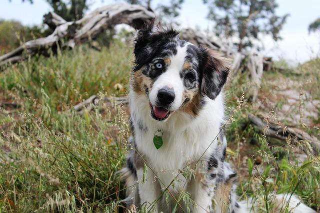 Dog, Headtilt, Nature, Puppy, Grass, Logs, Adorable