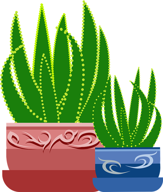 Graphic, Aloe, Plant, Cactus, Botanical, Healing
