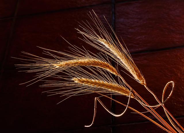 Barley, Dried Grass, Cereal Grain, Health Food