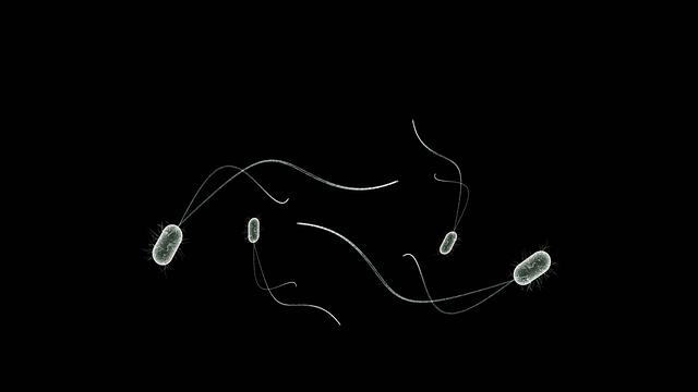 Bacteria, Microbes, Bio, Health, Healthcare