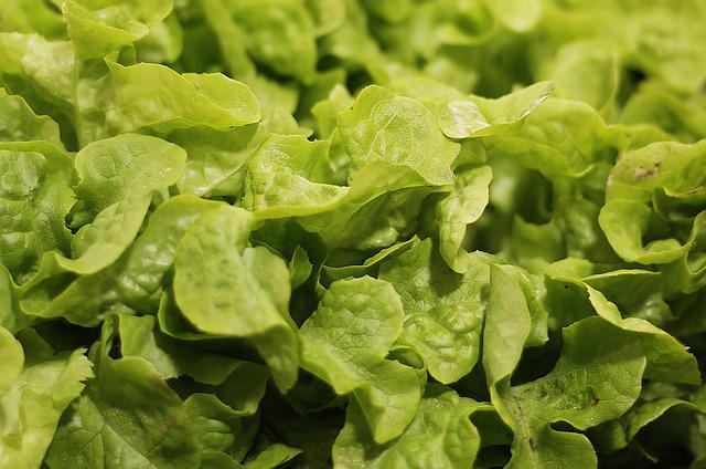 Salad, Salad Plant, Agriculture, Healthy, Bio, Fresh