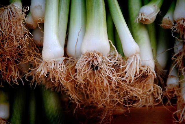 Onions, Leek, Vegetables, Root, Healthy, Spring Onions