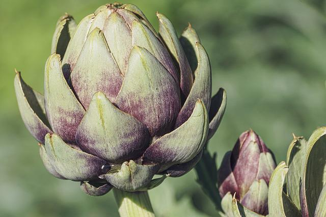 Artichokes, Vegetables, Food, Healthy, Plant, Vitamins